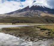 Cotopaxi Peak reflected in Limpiopungo lake