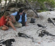 Iguanas-on-the-beach-1200x520