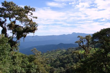 Mindo-area-cloud-forest-1-copia