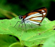 Mindo-butterfly-farm-Ecuador-cloud-forest