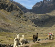 path-inca-trail-1024x520